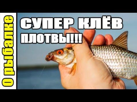 О рыбалке,супер клев плотвы,рыбалка на поплавок летом.