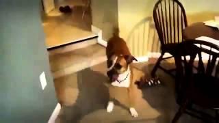 Радость собачья!...