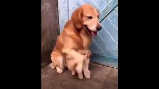 Собака защищает своего щенка