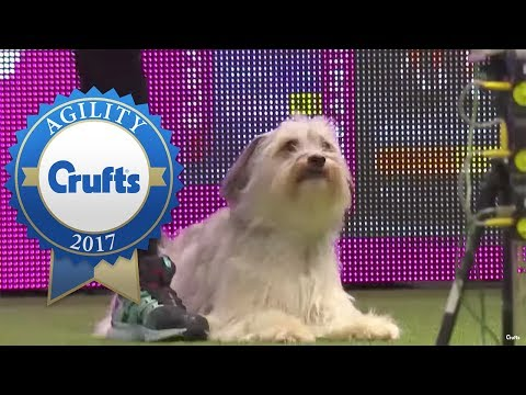 Agility Championship - Round 1 Part 1 | Crufts 2017