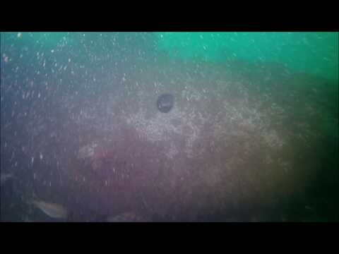 Holland 5 - Hole and steering gear video final