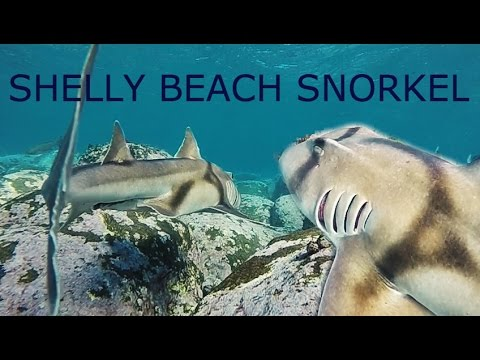 Cabbage Tree Bay Snorkel at Shelly Beach, Manly NSW, Australia