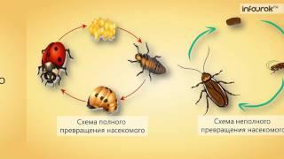 Насекомые  Размножение и развитие