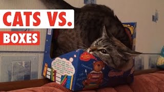 Cats in Boxes || Cats VS Boxes Funny Pet Compilation