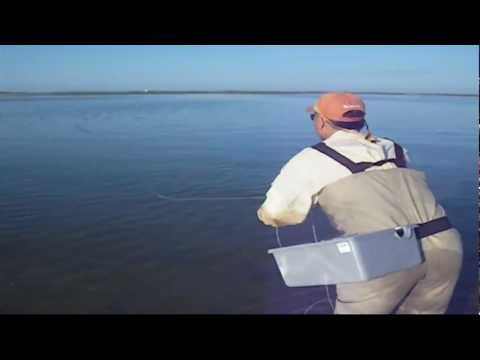 Cape Cod Fly Fishing On The Flats For Striped Bass HD Video