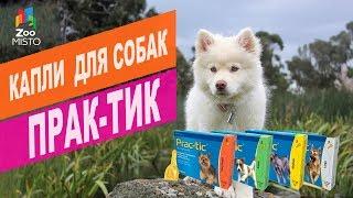 Капли для собак Прак-тик | Обзор капли для собак Прак-тик
