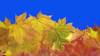Футаж осень листья падают, овощи переход #1 hd Footage Transitions Swipe Fall free download