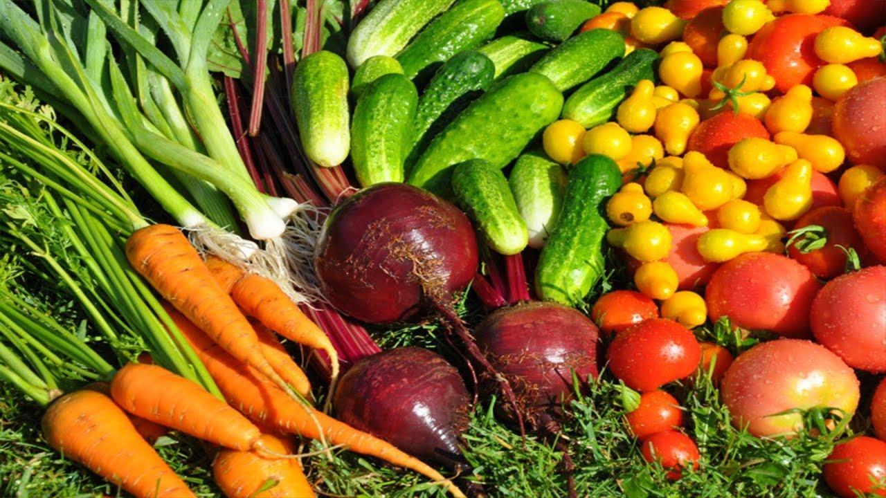 пищевые растения картинка данном случае имена