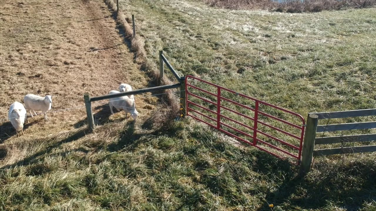 Extending the Poly Wire Fence for Sheep