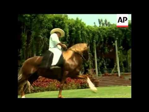 The Unique Qualities Of Peru's Famous Paso Horses