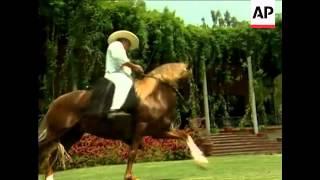 The unique qualities of Peru s famous Paso horses