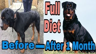 This Diet Plan Make Your Dog Very Healthy Fastly Gain/ BHOLA SHOLA