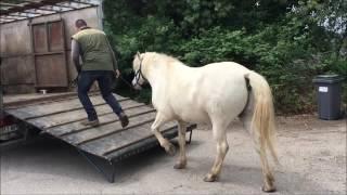Video BaikalSocart Betaillere 2016 05 13