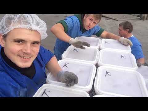 Работа на Камчатке | Рыбообработчик | Сгорел завод | Документальный фильм красное золото