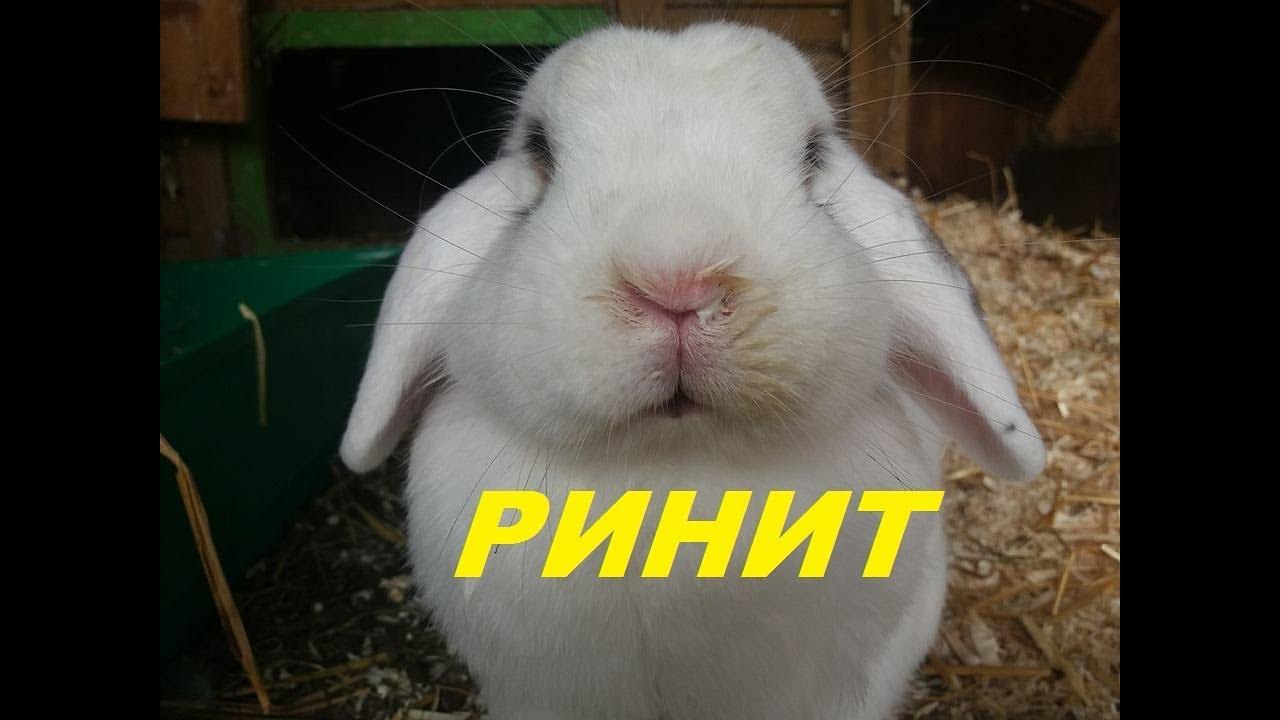 Как вылечить насморк у кроликов