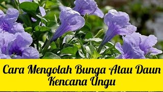 Download lagu Manfaat Dan Efek Samping Daun Pletekan (Kencana Ungu)
