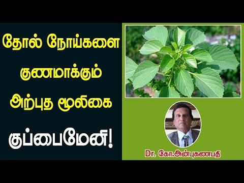 தோல் நோய்களை குணமாக்கும் அற்புத மூலிகை குப்பைமேனி | Kuppaimeni remedy for skin problems