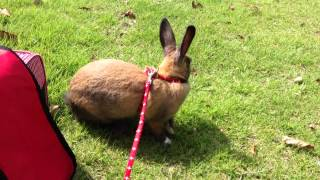 rabbit walking in a park