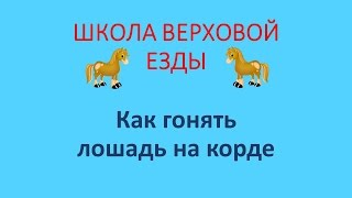 Как лошадь гонять на корде