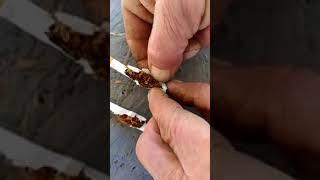 Сигареты с ртутью
