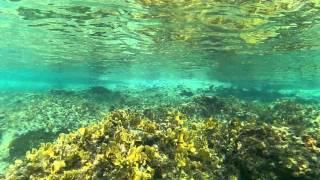 vivitar dvr 786 ocean view cozumel island
