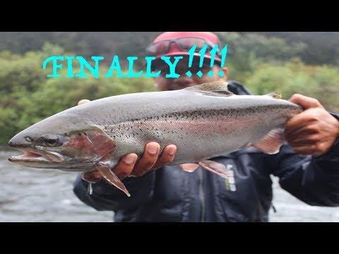 Fly Fishing New Zealand - The DREAM RAINBOW