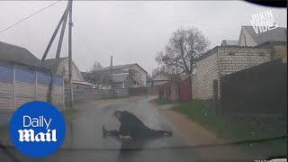 Hilarious moment drunk man stops traffic to do push ups - Daily Mail