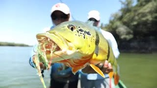 Fly Fishing The Agua Boa River For Giant Peacock Bass!
