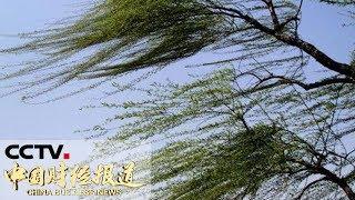 《中国财经报道》 20190520 17:00| CCTV财经