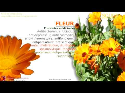 Fleur de souci bienfaits