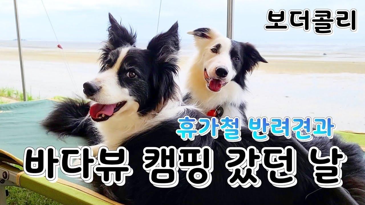 사람많은 휴가철에 강아지와 해수욕장으로 캠핑갔던날 바다뷰캠핑  고창 동호해수욕장