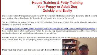 How to Potty Train your Chihuahua Puppy NOW!