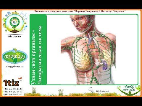 Узнай свой организм - Лимфатическая система
