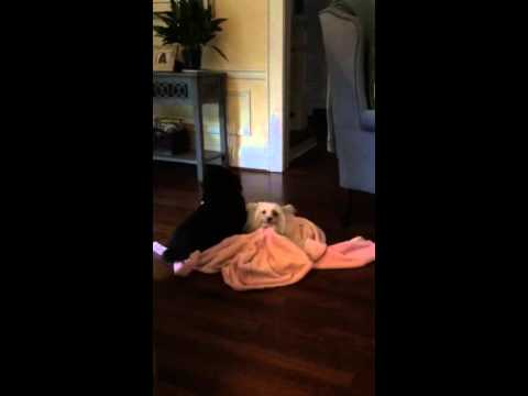 Dogs Doing The Dance Of Intimacy Youtube