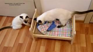 Разборки тайских котиков с кроваткой! Тайские кошки - это чудо! Funny Cats