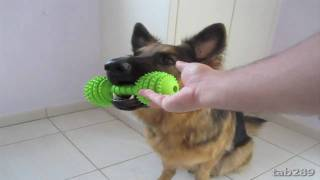 Dog Training Tutorial: Holding Objects & Clean Up!