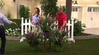 Cottage Farms 3-pc. Flutterby Multi-Color 3-in-1 Butterfly Bush with Dan Wheeler