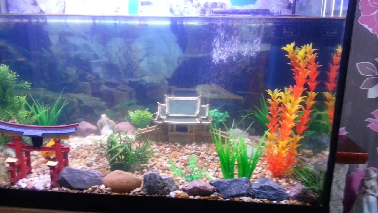 My cold water fish tank youtube for Youtube fish tank