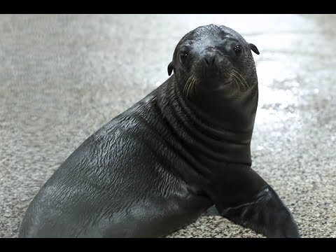We've Named Our Sea Lion Pup!
