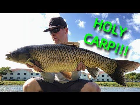 TOPWATER Fishing For BIG Grass Carp: How To Catch Grass Carp