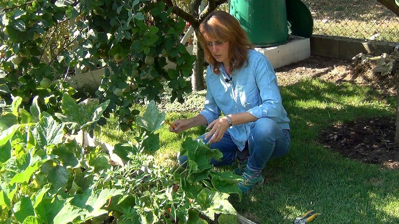 садовый работа в теплицах