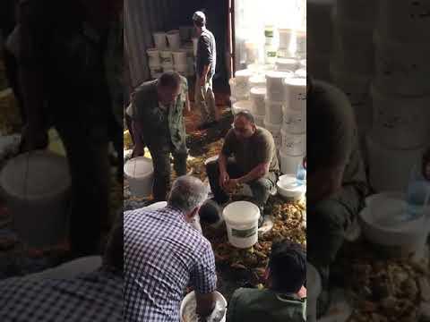 استخراج الكوكايين من المكدوس اللبناني، شوفوا الكميه