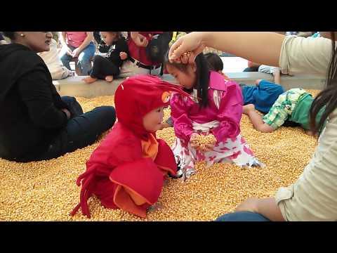 Corn maze 3