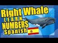 Spanish Numbers Right Whale Parade