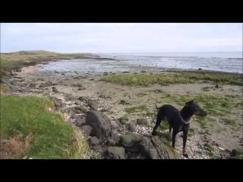 Chester The Manchester Terrier at the end of the world