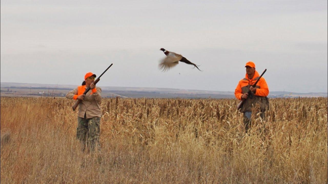 pheasant hunting videos