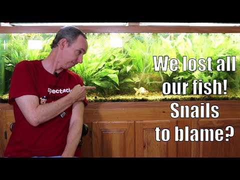 We Lost All Our Fish!  Snails To Blame?
