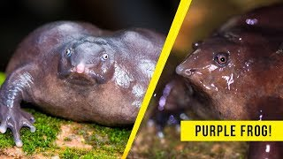 5 RARE Creatures That Actually Exist In Real Life!