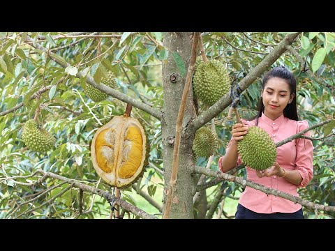 Durian fruit in my homeland and make Durian dessert for my family