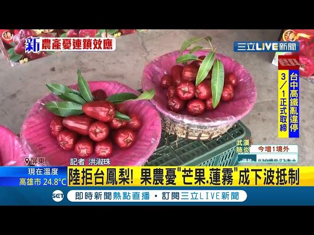 #三立最新 中國禁台鳳梨進口恐釀連鎖效應!?果農憂